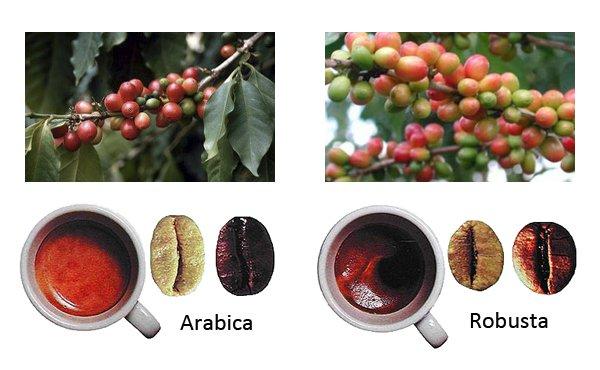 Купаж кофе арабика и робуста